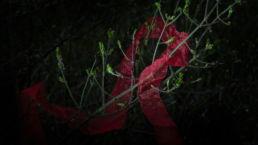 Rood lint verstrikt in een boom - Creative own Work - Diana van Neck - Fotograaf Zutphen